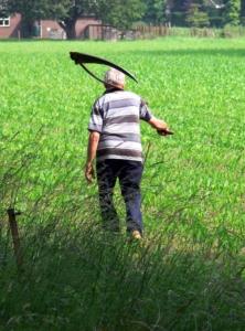 Rasen trimmen